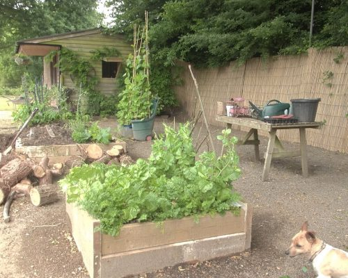 veggy-garden-radish-overseeing